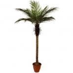 Dirbtinis augalas Palmė 2 210cm