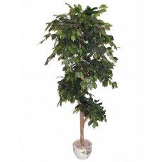 Kunstlik taim Ficus PLY 180cm
