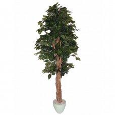 Kunstlik taim Ficus MEZZO 180cm