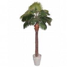 Mākslīgais augs Palmu koks ALTO 210cm