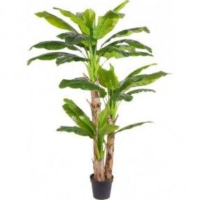 Dirbtinis augalas Bananas 240cm