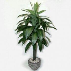 Искусственное растение Драцена 100cm