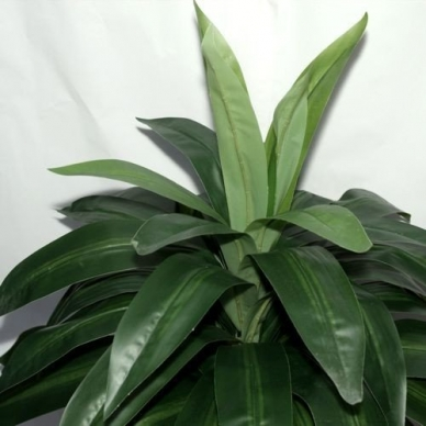 Dirbtinis augalas Dracena 100cm 2