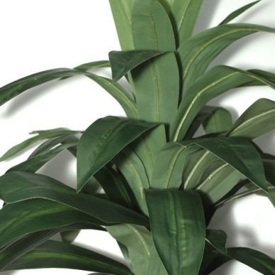 Dirbtinis augalas Dracena 100cm 3