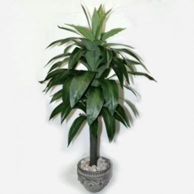 Dirbtinis augalas Dracena 100cm
