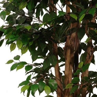 Dirbtinis augalas Fikusas 2 180cm 2