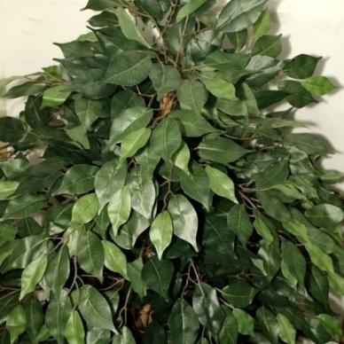 Dirbtinis augalas Fikusas 3 180cm 4