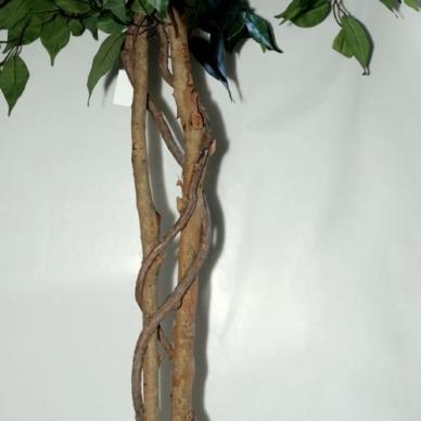 Dirbtinis augalas Fikusas 150cm 2